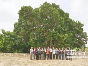 烏日會展中心 將保留老榕樹