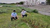 台中地標遭批雜草失控 水利局:雨水多草茂盛加強清理