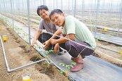 新農人合夥開墾 經營力量更大