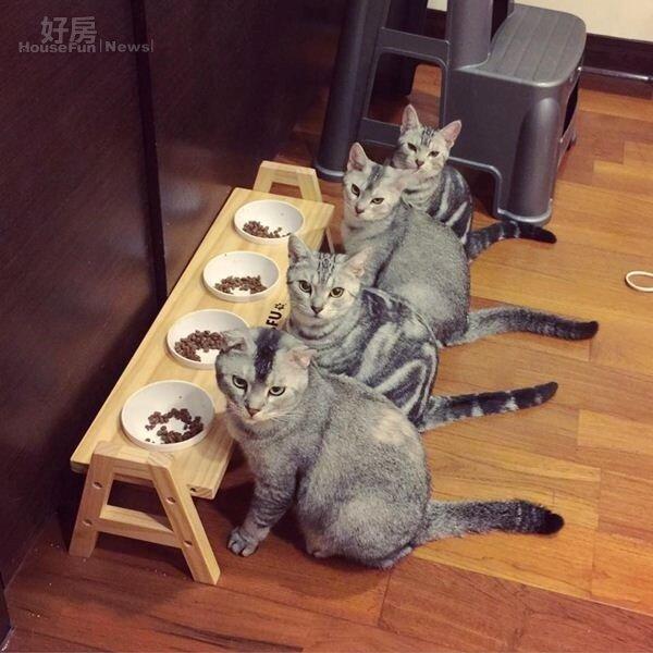 5.每隻貓都有專屬的碗,這張超萌照片PO到某貓咪社團,當時創下破萬人按讚。