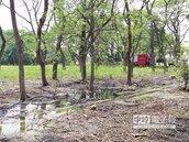 新營228公園 蚊蟲滿天飛