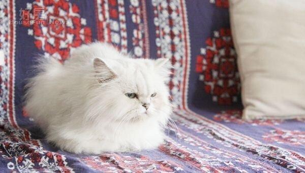 5.曾少宗有養寵物貓咪、寵物犬,因此租房時除了會找大坪數讓毛小孩有空間可以活動,租房前也都會先跟房東溝通。