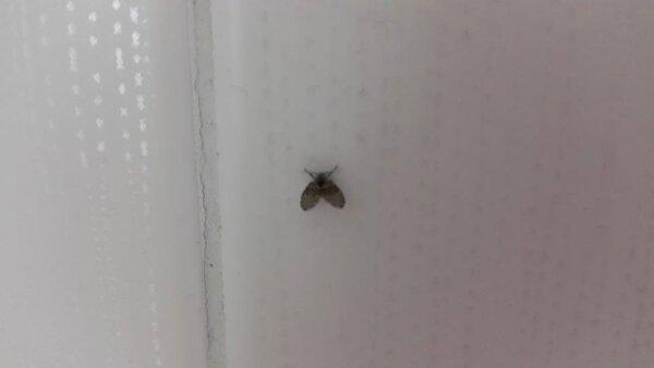 廁所裡揮之不去的小飛蟲到底要如何消滅,專家教你最終極的一招!(好房網News記者陳佑婷攝影)