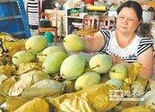 種芒果養癱兒 1斤賺嘸1元