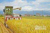 颱風前搶收稻 繳公糧排長龍