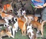 婦辭職當喵奴 把家讓給80 隻貓