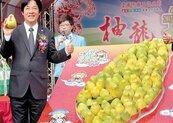 募集2000文旦紙箱 打造柚箱拱門