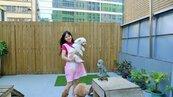 羅瑤開寵物精品旅館 打造毛小孩度假天堂