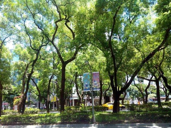 4.台北市敦化南路綠樹林蔭,美不勝收。