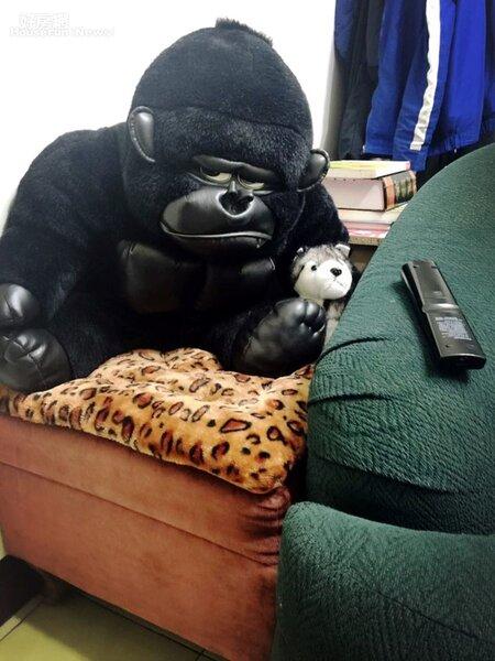 5.因為對布偶娃娃過敏,因此家裡目前只留下這隻黑猩猩,會故意放在客廳,是因為張婕筠認為有負責保護全家人的意涵。