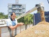 紅棗、杭菊採收在即 新農民上陣