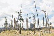 央北開發區變樹木墳場 廠商挨罰