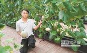 碩士農溫室種洋香瓜 瓜甜多汁