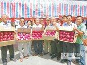 年產值1.2億 滿州紅龍果鮮上市