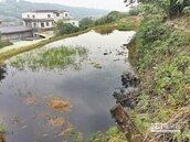養豬場排汙 大屯溪變化糞池