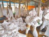 禽流感禁不住 H5N2新增6例