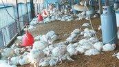 境外染H7N9流感 台商在台病逝