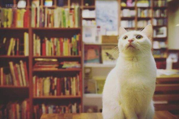 貓經濟為日本帶來了1年高達2兆3162億日圓(約台幣6800億)的經濟效益(圖/好房資料中心)