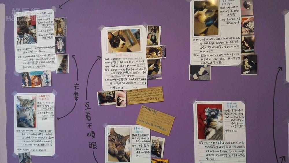 9牆壁一角掛著江明娟飼養6隻貓狗的寫真照片。