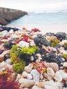 重油下沉 綠島生態浩劫40年來最嚴重