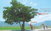 蔡依林樹加持 伯朗大道升格星光大道