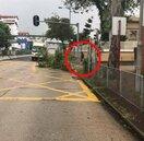 天鴿襲港!網友捕獲野生「發哥」 冒雨清理路樹