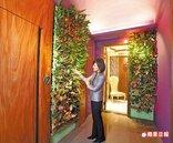 室內植生牆 家立體花園