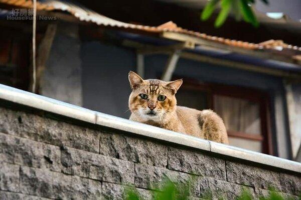 貓。(好房網News記者 陳韋帆攝影)