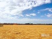 減風沙 近百公頃工地鋪稻草