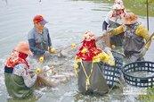 魚塭瘋種電 與養殖戶爭地