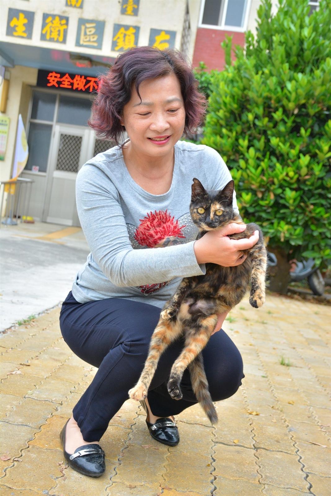 台南左鎮區衛生所護理長蔡秀珍抱的是「玳瑁」,牠出生就被丟在衛生所門口,蔡秀珍把貓咪照顧得很漂亮,有居民看了喜歡就認養帶回家。記者吳淑玲/攝影