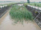 佳龍橋出海河道長滿雜草 影響排水恐致淹水