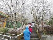 陽明山降雪 全台愈來愈冷