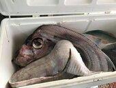 地震觀察指標 除了地震魚「牠們」也有感應
