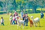 「天馬」草泥馬 進駐省農會牧場