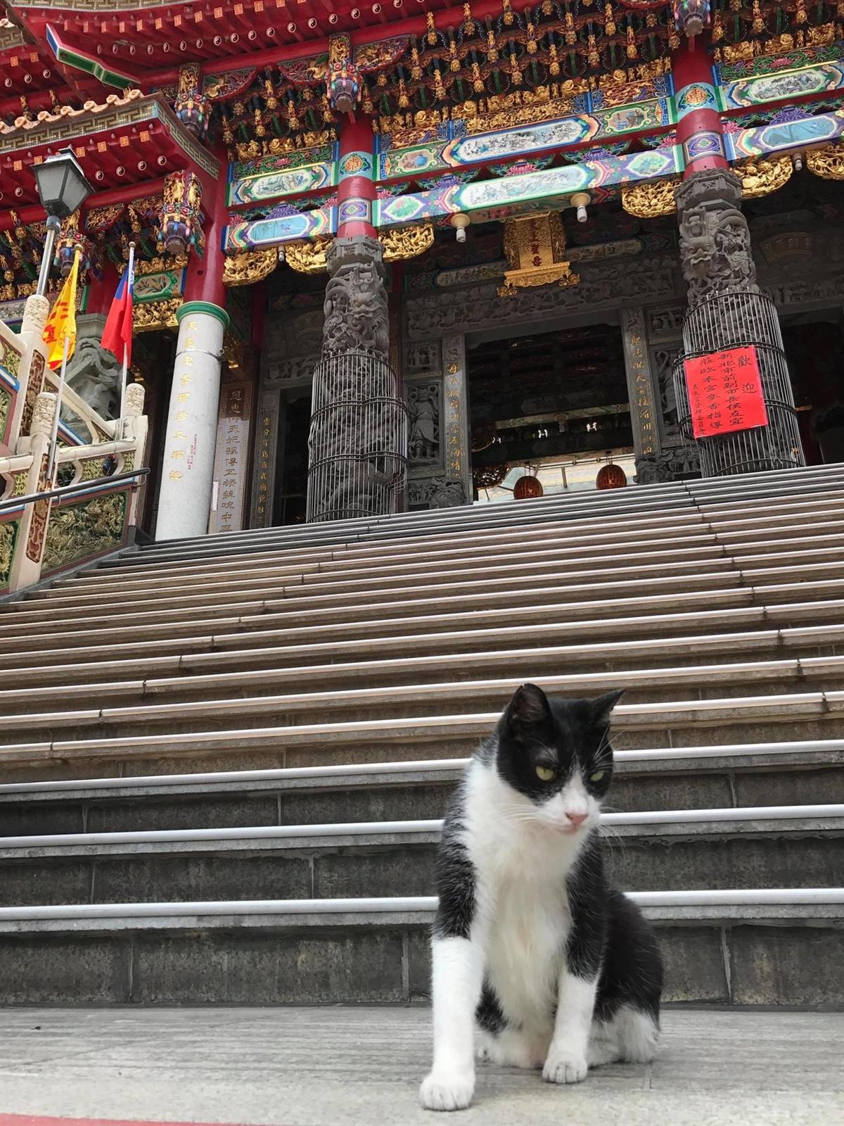 三重義天宮內、外都可見貓咪的蹤影。 記者陳珮琦/攝影