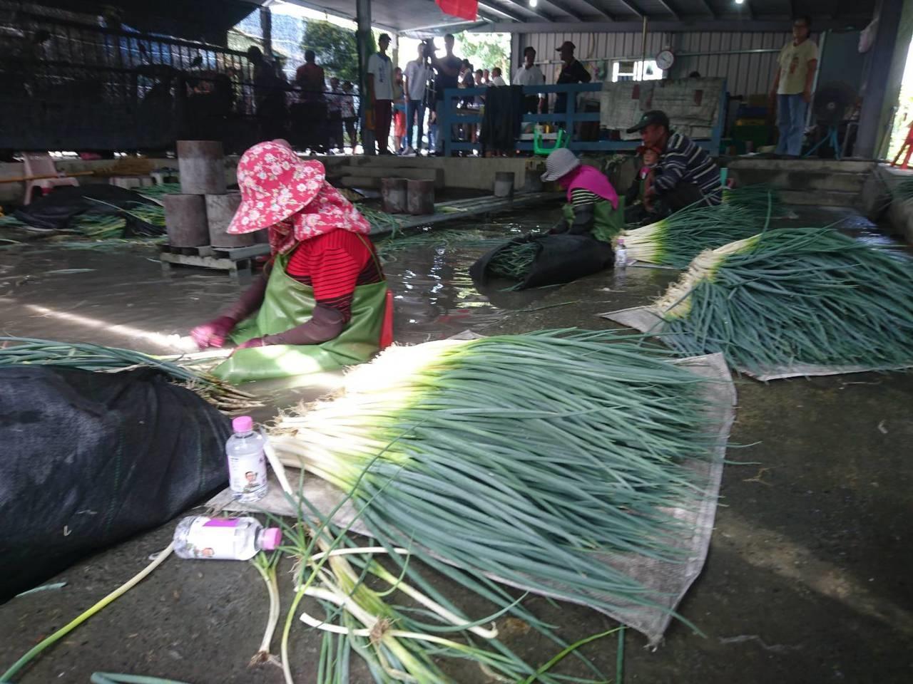 懷疑三星蔥價被打壓,宜蘭縣多名三星蔥農今天群起抗議。記者羅建旺/攝影