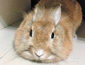 十二生肖流年解析 兔族幸運流年、能量滾滾來