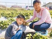 新春來港都遊玩 一日農夫採莓趣