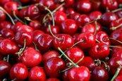 櫻桃出口創新高 大陸吃貨養活智利50萬人