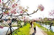 春遊之亂 地方加碼延3月29日公布