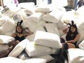 寢具業者特賣換現金 羊毛枕僅百元民眾搶翻