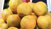 暖冬柑橘受歡迎價格看俏 比去年漲約五成