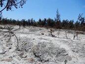 保安林火燒後一片光禿 盼植樹後能抵擋風沙