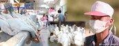 H7N9列法定傳染病 全國進入第三級警戒
