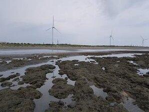 環團再抗議觀塘案 中油已計畫藻礁調查