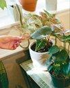 美盆栽植物夯 千禧世代新寵