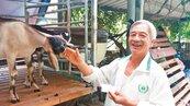 獸醫帶3羊返鄉 老家變體驗區