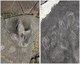 承德避暑山莊曾是侏羅紀公園?驚見逾300個恐龍足跡