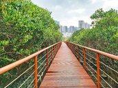 全台最大水筆仔森林 淡水紅樹林木棧步道重新開放